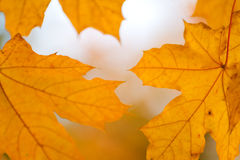 Beautiful yellow orange red autumn leaves background Stock Photo