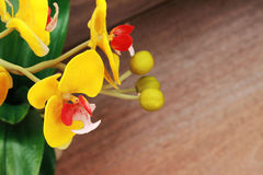 Beautiful yellow orchid on a brown background Royalty Free Stock Images