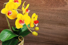Beautiful yellow orchid on a brown background Royalty Free Stock Image