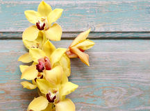 Beautiful yellow orchid flowers on wood Royalty Free Stock Photography