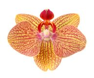 Beautiful yellow orchid Stock Photo
