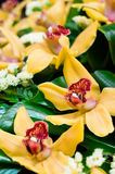 Beautiful yellow orchids bouquet. With some green bushes leafs Royalty Free Stock Image