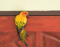 Beautiful yellow parrot Sun Conure image on a wooden door. Royalty Free Stock Image