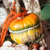 On beautiful yellow pumpkin Stock Photos