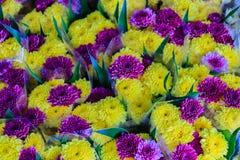 Beautiful yellow and purple chrysanthemum flowers as background Stock Image