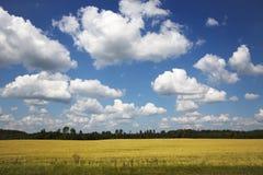 Beautiful yellow rape field Royalty Free Stock Images