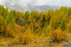 Yellow and red colors of autumn in the mountain forest. Beautiful yellow and red colors of autumn in the mountain or hill forest royalty free stock image