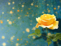 Beautiful yellow rose with green leaves on background Royalty Free Stock Image