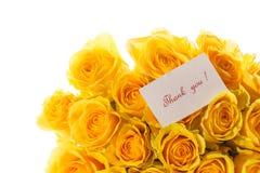 Beautiful yellow rose Stock Image