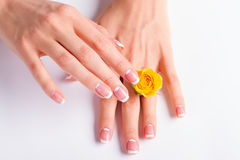 Beautiful yellow rose between the women's fingers. Stock Images