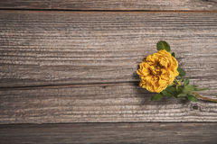 Beautiful yellow rose on wooden background Royalty Free Stock Image