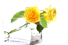 Beautiful yellow roses Stock Photo
