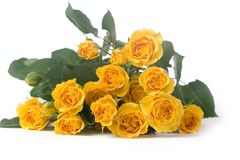 Beautiful yellow roses Royalty Free Stock Image