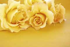 Beautiful yellow roses on rustic wood table. Stock Photography