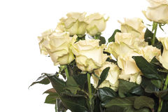 Beautiful yellow roses. On a white background stock photos