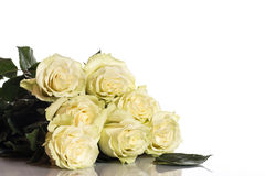 Beautiful yellow roses. On a white background Royalty Free Stock Images