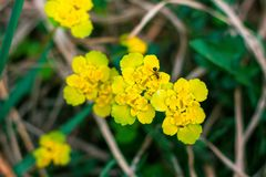 On a beautiful yellow shade of flowers sits a small insect called the ant. Life in the wild is very beautiful royalty free stock image