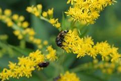 Beautiful yellow summer flower in my garden Stock Photos