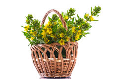Beautiful yellow summer flowers Royalty Free Stock Photos