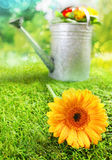 Beautiful yellow summer daisy Stock Image