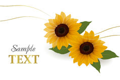 Beautiful yellow Sunflower background. Vector Royalty Free Stock Images