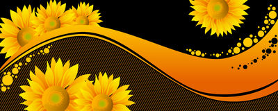 Beautiful yellow Sunflowers Stock Image
