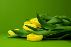 Beautiful yellow tulips Royalty Free Stock Photography