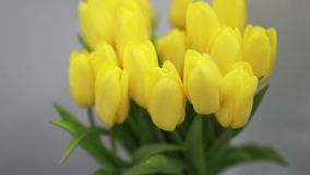 Beautiful yellow tulips flowers in white interior closeup stock video footage