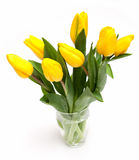 Beautiful yellow tulips in a glass Stock Image