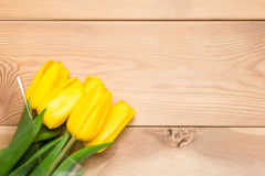 Beautiful yellow tulips and space wooden boards Stock Image