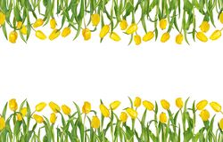 Beautiful yellow tulips on stems with green leaves in seamless horizontal frame. Isolated on white background. Space for your text. Bright spring mockup. Can royalty free illustration