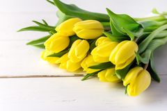 Beautiful Yellow Tulips on White Wooden Background Cop Space Beautiful Spring Flowers Royalty Free Stock Images