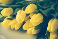 Beautiful Yellow Tulips on White Wooden Background Copy Space Beautiful Spring Flowers Background with Flowers Toned Stock Photo