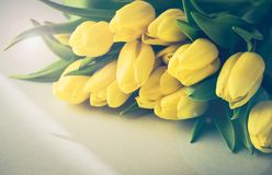 Beautiful Yellow Tulips on White Wooden Background Copy Space Beautiful Spring Flowers Background with Flowers Toned Royalty Free Stock Photography