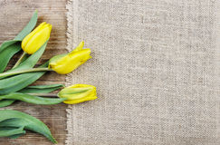 Beautiful yellow tulips on wooden background Royalty Free Stock Photo