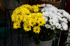 Beautiful yellow and white cut flowers Royalty Free Stock Photo
