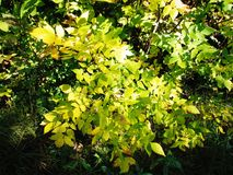 Autumn bush Stock Photo