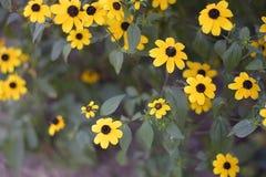 Beautiful yellowl summer flowers close up in my garden Stock Image