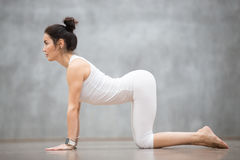 Beautiful Yoga: Cow, Bitilasana pose. Beautiful young woman with tattoo on her foot meaning Wild cat working out against grey wall, doing yoga or pilates Royalty Free Stock Images