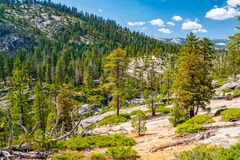 Beautiful Yosemite National Park forest. Amazing National Park forest view. In USA royalty free stock photography