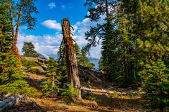 Beautiful Yosemite National Park forest. Amazing National Park forest view. In USA stock image