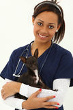 Beautiful Young Adult Veternarian with Chihuahua stock photography
