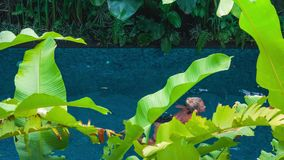 Beautiful young blond girl in black bathing suit floating in the pool. Green banana leaves plants moving and cover the. View. Enjoing vacation stock video footage