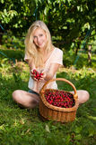 Beautiful young blond woman harvesting cherries on a hot spring Stock Photography
