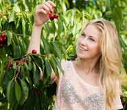 Beautiful young blond woman harvesting cherries on a hot spring Royalty Free Stock Photos