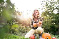 Beautiful young blond woman in her garden harvesting pumpkins Royalty Free Stock Photos