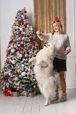 Beautiful young blonde girl playing with dog near christmas tree stock photos