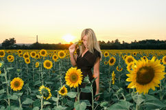 Beautiful young blonde model in black dress on a field of sunflowers Royalty Free Stock Images