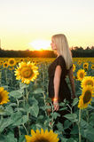 Beautiful young blonde model in black dress on a field of sunflowers Stock Photography