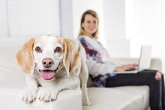 Beautiful young blonde woman with her dog at home. A Beautiful young blonde woman with her dog at home Stock Image